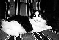 /images/133/2004-08-olas-idgie-bw1.jpg - #01968: Itchie in Greenwood Village … August 2004 -- Greenwood Village, Colorado