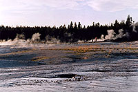 /images/133/2004-08-yello-geyser5.jpg - #02093: Yellowstone geysers … August 2004 -- Yellowstone, Wyoming