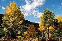 /images/133/2004-09-indep-colors-trees.jpg - #02110: images of Independence Pass … Sept 2004 -- Independence Pass, Colorado