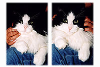 /images/133/2004-09-itchie-ola-sitting1.jpg - #02140: Itchie the cat with Ola … Sept 2004 -- Greenwood Village, Colorado