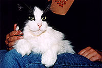 /images/133/2004-09-itchie-ola-sitting2.jpg - #02141: Itchie the cat with Ola … Sept 2004 -- Greenwood Village, Colorado
