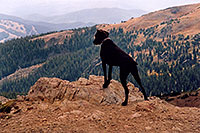 /images/133/2004-09-loveland-dog-view.jpg - #02157: Labrador Retrievers at Loveland Pass … Sept 2004 -- Loveland Pass, Colorado