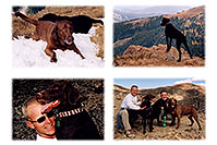/images/133/2004-09-loveland-dogs1.jpg - #02147: Labrador Retrievers at Loveland Pass … Sept 2004 -- Loveland Pass, Colorado