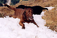 /images/133/2004-09-loveland-dogs6.jpg - #02153: Labrador Retrievers at Loveland Pass … Sept 2004 -- Loveland Pass, Colorado