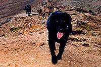 /images/133/2004-09-loveland-dogs8.jpg - #02155: Labrador Retrievers at Loveland Pass … Sept 2004 -- Loveland Pass, Colorado