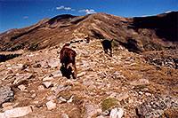 /images/133/2004-09-loveland-dogs9.jpg - #02156: Labrador Retrievers at Loveland Pass … Sept 2004 -- Loveland Pass, Colorado