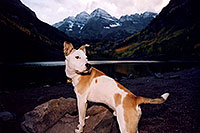 /images/133/2004-09-maroon-dog-rock.jpg - #02168: Pitbull at Maroon Lake … Sept 2004 -- Maroon Bells, Colorado