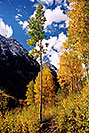 /images/133/2004-09-maroon-yellow1.jpg - #02240: Maroon Bells in September … Sept 2004 -- Maroon Bells, Colorado