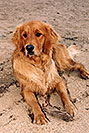 /images/133/2004-09-twinlakes-dogs02.jpg - #02246: Ruby (Golden Retriever) at Twin Lakes … Sept 2004 -- Twin Lakes, Colorado