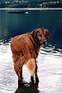 /images/133/2004-09-twinlakes-dogs04.jpg - #02248: Max (Golden Retriever) at Twin Lakes … Sept 2004 -- Twin Lakes, Colorado