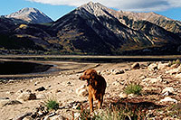 /images/133/2004-09-twinlakes-dogs07.jpg - #02215: Ruby (Golden Retriever) at Twin Lakes … Sept 2004 -- Twin Lakes, Colorado