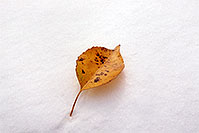 /images/133/2004-10-cent-snow-leaf.jpg - #02242: a lone leaf in Centennial … Oct 2004 -- Centennial, Colorado