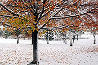 /images/133/2004-10-cent-snow-tree.jpg - #02243: images of Centennial … Oct 2004 -- Centennial, Colorado