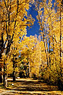 /images/133/2004-10-crested-almont1-v.jpg - #02261: Fall in Almont … October 2004 -- Almont, Colorado