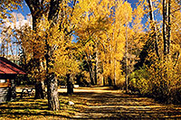 /images/133/2004-10-crested-almont4.jpg - #02264: Fall in Almont … October 2004 -- Almont, Colorado