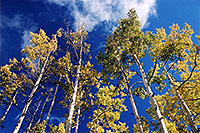 /images/133/2004-10-crested-fall1.jpg - #02283: along Gothic Road, past Mount Crested Butte … Oct 2004 -- Crested Butte, Colorado