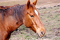 /images/133/2004-10-crested-horse1.jpg - #02291: Fantasy Ranch … Oct 2004 -- Mount Crested Butte, Crested Butte, Colorado