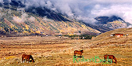 /images/133/2004-10-crested-horses-land-pano.jpg - 02329: horses grazing with Slate River Road in background and fog over the mountains … Oct 2004 -- Crested Butte, Colorado