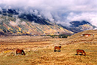/images/133/2004-10-crested-horses-land.jpg - #02331: horses grazing with Slate River Road in background and fog over the mountains … Oct 2004 -- Crested Butte, Colorado