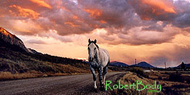 /images/133/2004-10-crested-sunset-horse-pano.jpg - #02346: horse walking home during evening on Slate River Road … Oct 2004 -- Crested Butte, Colorado