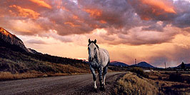 /images/133/2004-10-crested-sunset-horse-w.jpg - #02307: horse walking home during evening on Slate River Road … Oct 2004 -- Crested Butte, Colorado