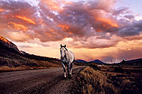 /images/133/2004-10-crested-sunset-horse.jpg - #02306: evening on Slate River Road … Oct 2004 -- Crested Butte, Colorado