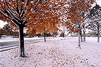 /images/133/2004-11-centennial-snow-trees.jpg - #02358: When fall turns to winter in Denver suburbs … Nov 2004 -- Centennial, Colorado