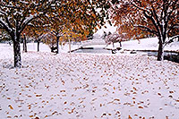 /images/133/2004-11-centennial-snow1.jpg - #02395: When fall turns to winter in Denver suburbs … Nov 2004 -- Centennial, Colorado