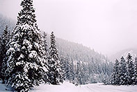 /images/133/2005-02-evans-snowy-road1.jpg - #02455: snowy trees by road before Mt Evans … Feb 2005 -- Mt Evans, Colorado