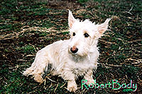 /images/133/2005-03-durango-abbie1.jpg - #02486: Abbie (Scottish Terrier) … March 2005 -- Durango, Colorado