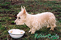 /images/133/2005-03-durango-abbie2.jpg - #02481: Abbie (Scottish Terrier) … March 2005 -- Durango, Colorado