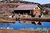/images/133/2005-03-durango-house-pond1.jpg - #02451: morning … March 2005 -- Durango, Colorado