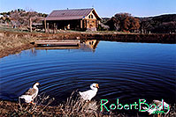 /images/133/2005-03-durango-lake-geese.jpg - #02469: Geese by the pond … March 2005 -- Durango, Colorado