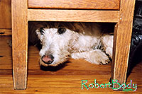 /images/133/2005-03-durango-max-chair2.jpg - #02510: Max (Scottish Terrier) hiding … March 2005 -- Durango, Colorado