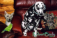 /images/133/2005-03-durango-max-xander-.jpg - #02509: Constantine talking to Xander (Dalmation), Max (Scottish Terrier) in back … March 2005 -- Durango, Colorado