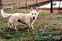 /images/133/2005-03-durango-max2.jpg - #02506: Max (Scottish Terrier) … March 2005 -- Durango, Colorado