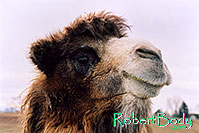 /images/133/2005-03-durango-mollie3.jpg - #02512: Mollie (Double Humped Camel) … March 2005 -- Durango, Colorado