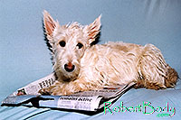 /images/133/2005-03-durango-sofa-abbie1.jpg - #02490: Abbie (Scottish Terrier) on a sofa … March 2005 -- Durango, Colorado