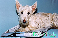 /images/133/2005-03-durango-sofa-abbie2.jpg - #02517: Abbie (Scottish Terrier) on a sofa … March 2005 -- Durango, Colorado
