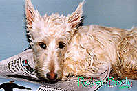 /images/133/2005-03-durango-sofa-abbie4.jpg - #02493: Abbie (Scottish Terrier) on a sofa … March 2005 -- Durango, Colorado