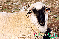 /images/133/2005-03-durango-timmy1.jpg - #02518: Timmy (Ram) … March 2005 -- Durango, Colorado
