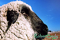 /images/133/2005-03-durango-timmy4.jpg - #02523: Timmy (Ram) … March 2005 -- Durango, Colorado