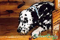 /images/133/2005-03-durango-xander1.jpg - #02530: Xander (Dalmation) lying on the stairs … March 2005 -- Durango, Colorado