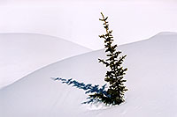 /images/133/2005-03-snowmass-tree1.jpg - #02594: a lone tree near Molas Pass … March 2005 -- Molas Pass, Colorado
