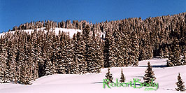 /images/133/2005-03-wolfcreek-top-tree1-pano.jpg - #02603: March at Wolf Creek Pass … March 2005 -- Wolf Creek Pass, Colorado