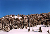 /images/133/2005-03-wolfcreek-top-tree1.jpg - #02565: March at Wolf Creek Pass … March 2005 -- Wolf Creek Pass, Colorado