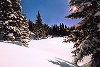 /images/133/2005-03-wolfcreek-trees1.jpg - #02604: Morning sun peeking while walking knee-deep snow … March 2005 -- Wolf Creek Pass, Colorado