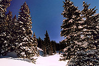 /images/133/2005-03-wolfcreek-trees2.jpg - #02606: March at Wolf Creek Pass … March 2005 -- Wolf Creek Pass, Colorado