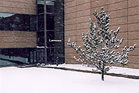 /images/133/2006-01-jep-building-tree.jpg - #02704: images of Jeppesen in Englewood … Jan 2006 -- Englewood, Colorado