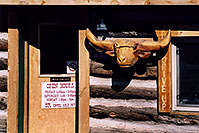 /images/133/2006-02-divide-cowboy-shack.jpg - #02730: Carved Longhorn Cow at Cowboy Kitchen Bar-B-Que … images of Divide … Feb 2006 -- Divide, Colorado